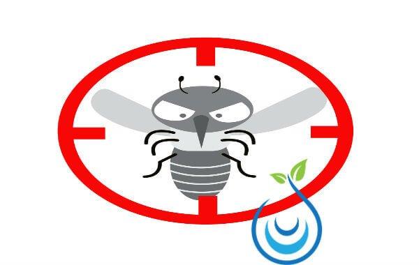 طريقة التخلص من الحشرات