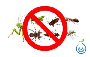 شركة مكافحة حشرات بالرياض, شركة مكافحة حشرات شرق الرياض, ارقام مكافحة الحشرات بالرياض, مكافحة حشرات شمال الرياض, ارقام شركات مكافحة الحشرات بالرياض, افضل شركة رش مبيدات بالرياض, شركة رش مبيد بالرياض, مكافحة الحشرات المنزلية, افضل شركة مكافحة حشرات وفئران, Insect control Riyadh